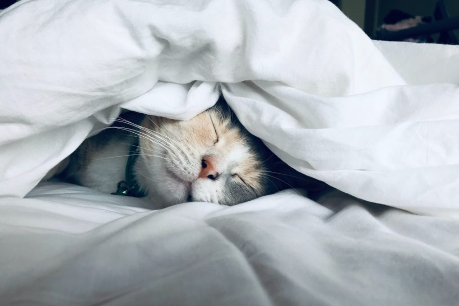 20 Idées de revenu passif pour faire de l'argent pendant votre sommeil